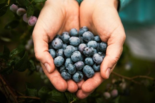 Handfull of Blueberries