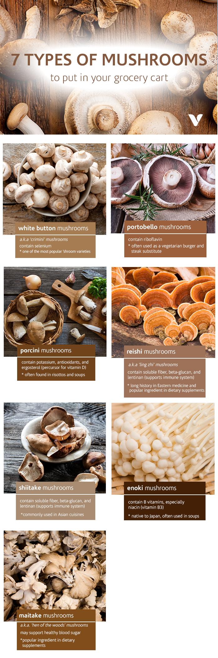 7 Types Of Mushrooms.jpg